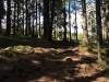 Ferdsel og oppførsel i skog og mark